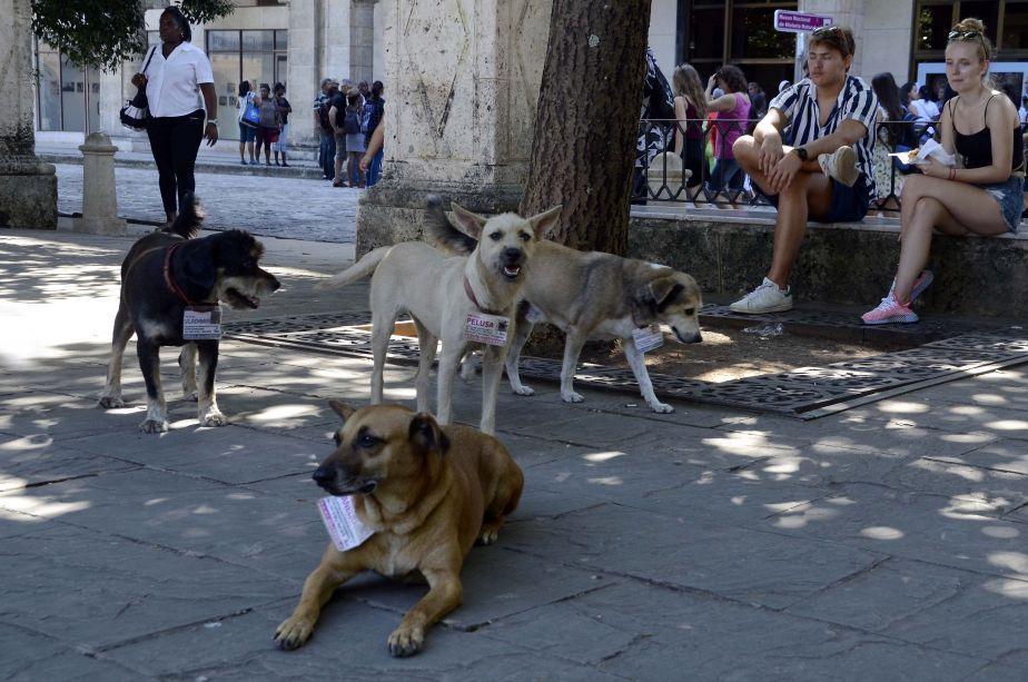 Los perros adultos son los que menos oportunidades tienen de conseguir un hogar. (Foto: Xinhua)