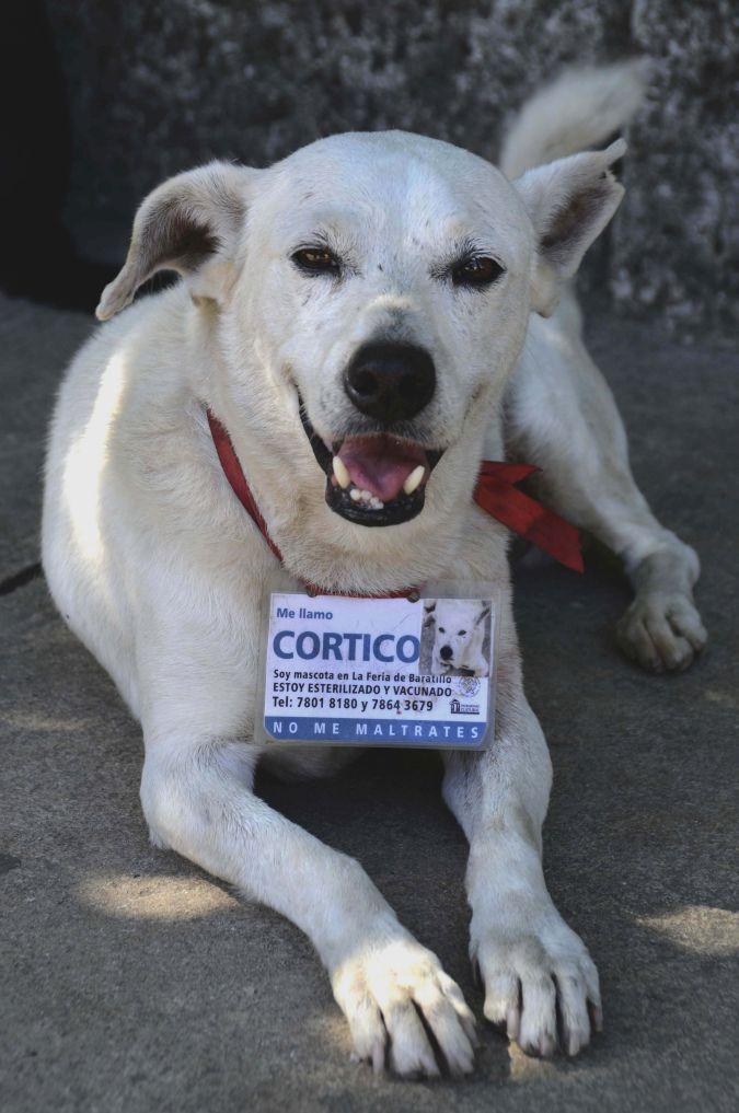 Las leyes cubanas prohíben la presencia de animales en lugares de trabajo. (Foto: Xinhua)