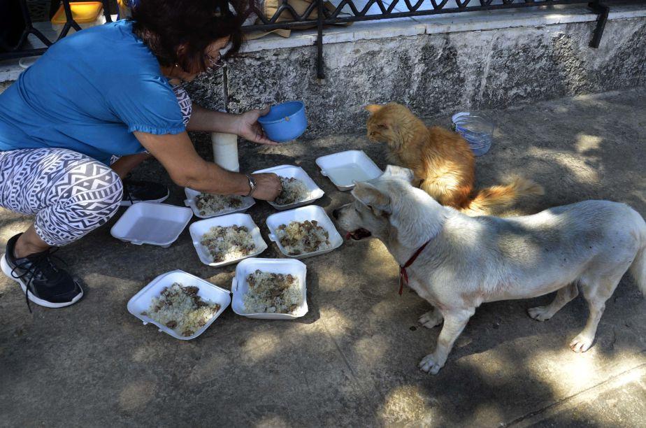 Cada día, Margarita García se acerca a la centenaria Plaza de Armas, donde cuida y alimenta a una decena de perros callejero. (Foto: Xinhua)