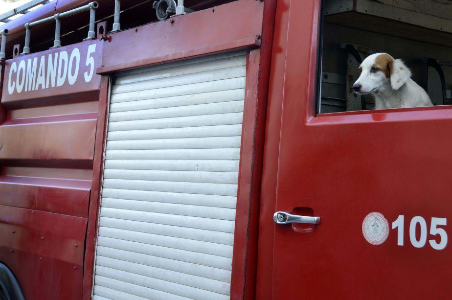 El Comando 5 de La Habana lleva en sus carros a Nena, una perra flacucha que un bombero recogió en la calle. (Foto: Xinhua)