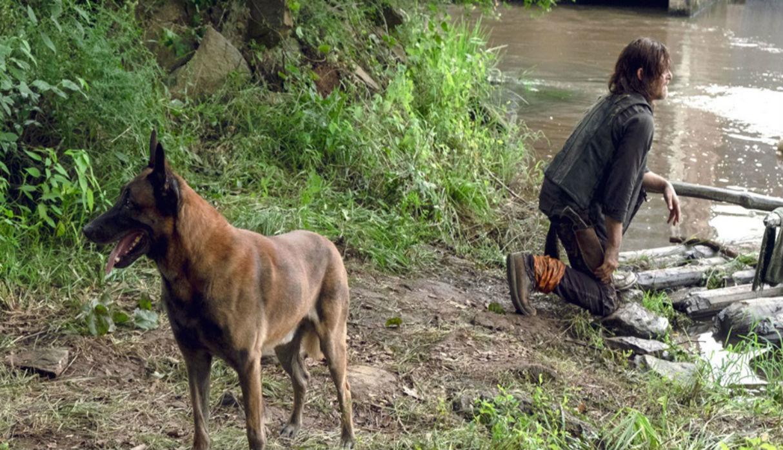 Daryl y su mascota en la serie. (Fotos: AMC)