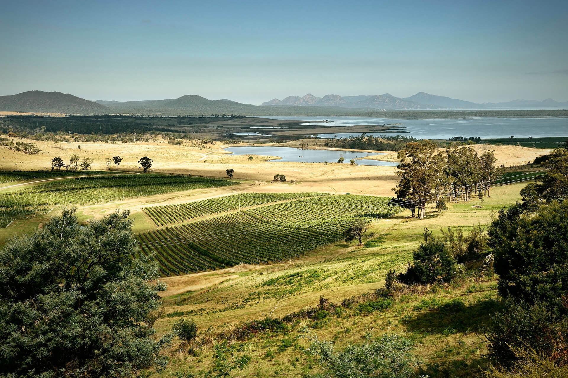 Los llanos australianos son perfectos para que la ceparieslingcrezca y de origen a un delicioso vino. (Foto: Difusión)