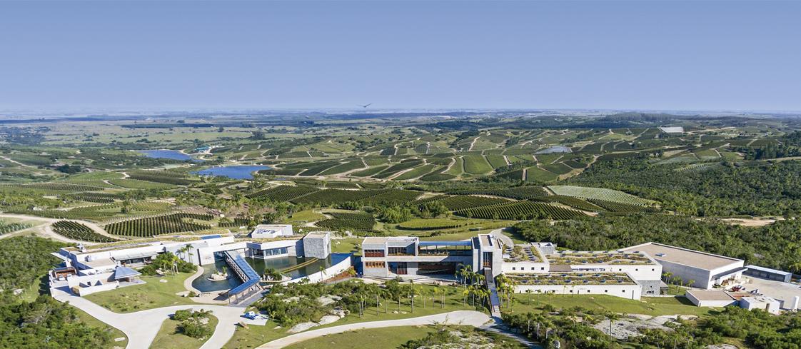 Bodega Garzón es una de las productoras más grande de vino en el país charrúa. (Foto: Difusión)