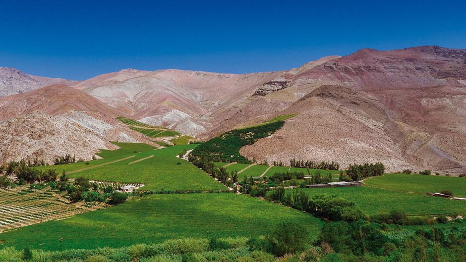 El valle del Elqui destaca por su delicioso vino. (Foto: Difusión)