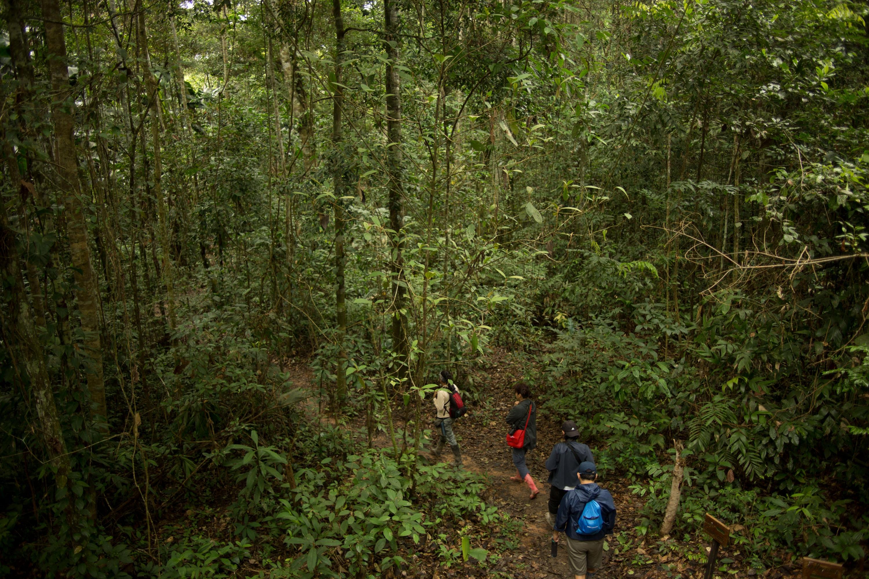 No hay nada más reconfortante que caminar por los parajes de la selva. (Foto: PromPerú)