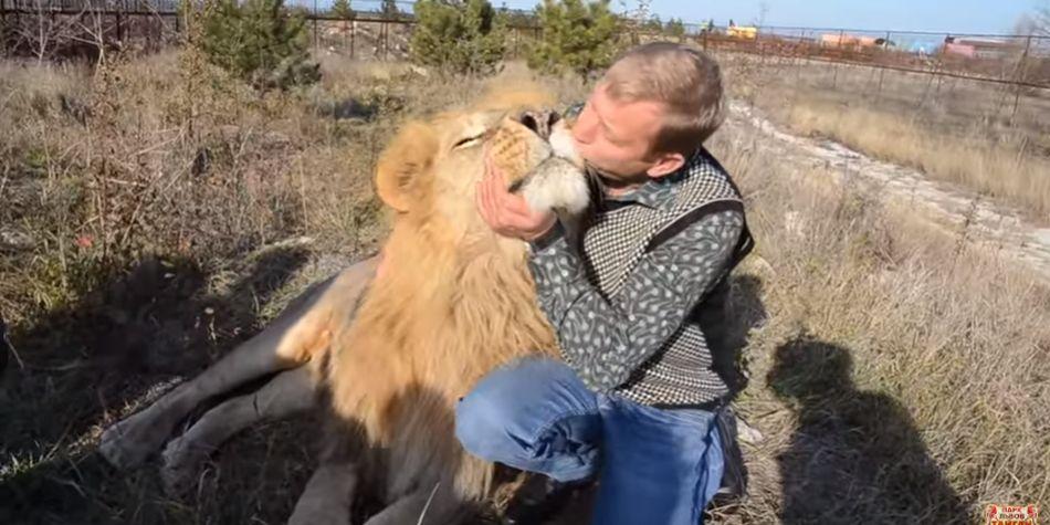 El animal pese a las muestras de cariño de su cuidador decide permanecer acostado. (Foto: Captura de Youtube)