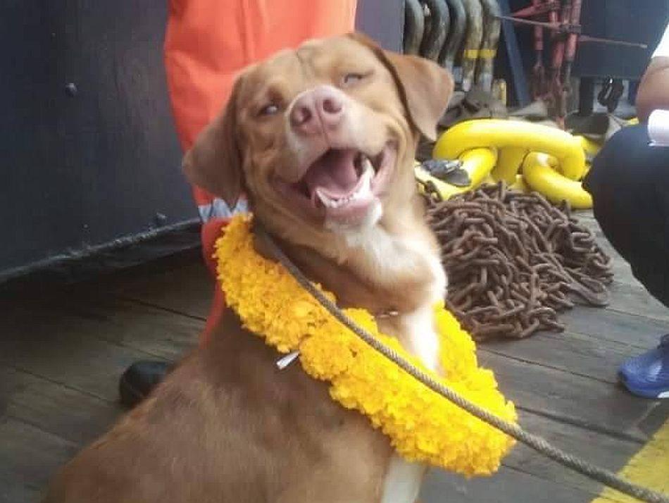 Tras los malos momento, el perrito volvió a sonreír y llenar de amor a sus salvadores. (Foto: Facebook Vitisak Payalaw)