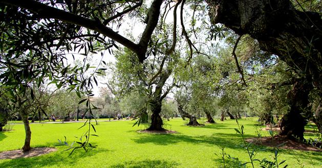 El bosque El Olivar es considerado como uno de los pocos pulmones de Lima. (Foto: Municipalidad de San Isidro)