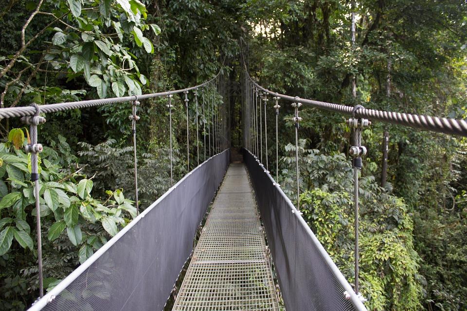 Los puentes aéreos te permitirá caminar sobre las copas de los árboles. (Foto: Pixabay)