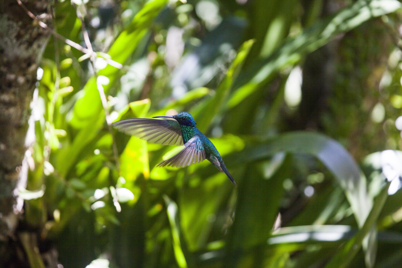 La naturaleza rodea al Cañón del Sonche donde podrás deleitarte con el vuelo de los colibries. (Foto: PromPerú)