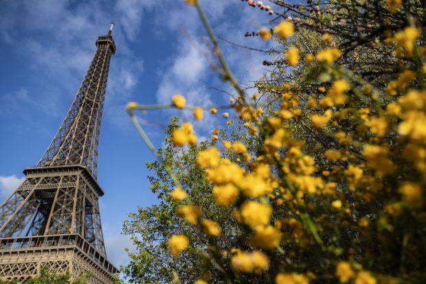 Esta fotografía, tomada el 3 de abril de 2019, muestra árboles en flor frente a la torre Eiffel en París. (Foto: AFP)