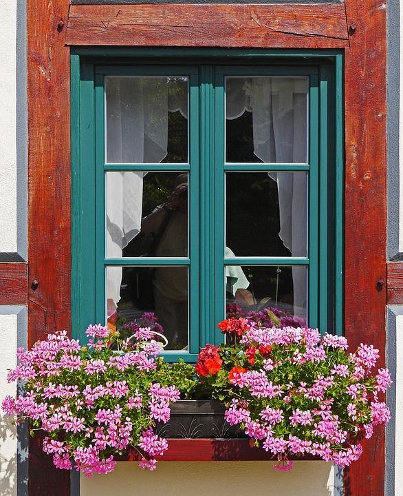 El geranio le dará un aroma especial a tu casa. (Foto: Pixabay)