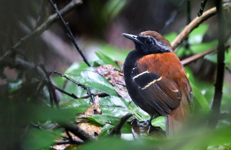 Aquí habitan gran cantidad de flora y fauna endémica de la región amazónica. (Foto: PromPerú)