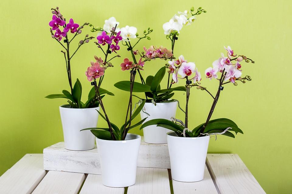 Las orquídeas se ven imponentes en cualquier espacio de nuestra casa. (Foto: Pixabay)