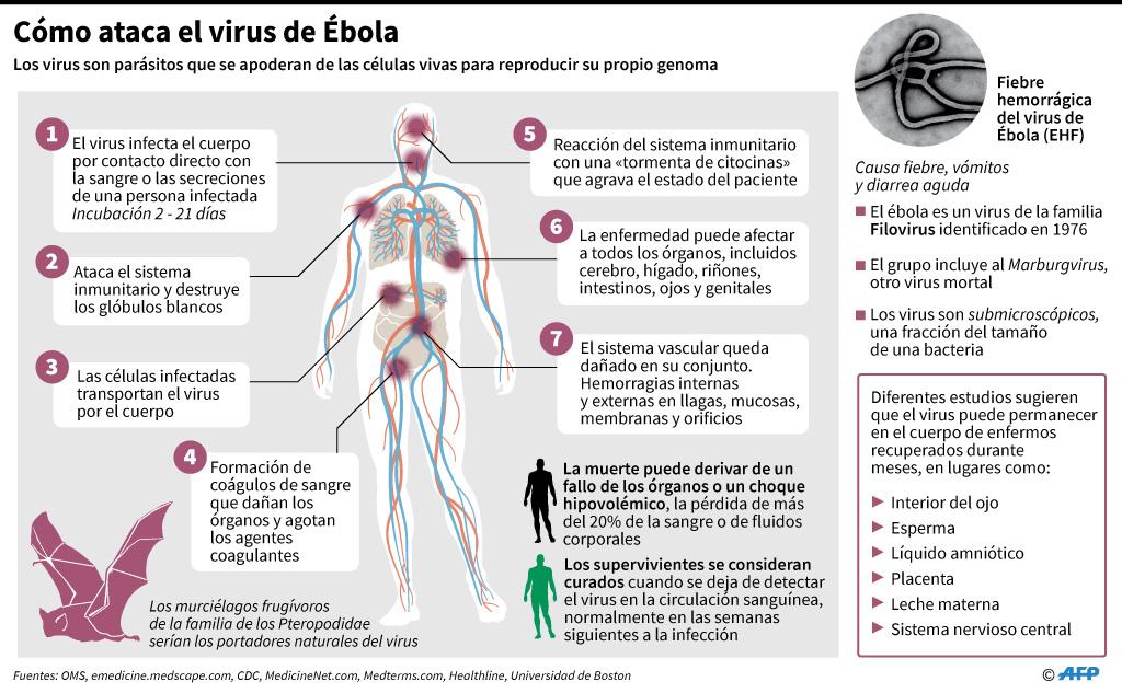 Ficha sobre el virus de Ébola, luego de que la OMS confirmara el primer caso de esta enfermedad en Uganda desde que estalló la epidemia en RDC hace 10 meses. (AFP)