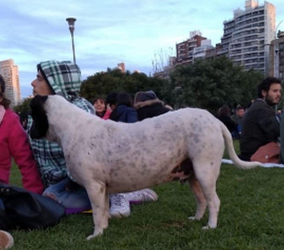 'Perro vaca' compartía los ratos libres de los estudiantes y era la amiga predilecta de muchos. (Foto: Twitter @@manadigiur )