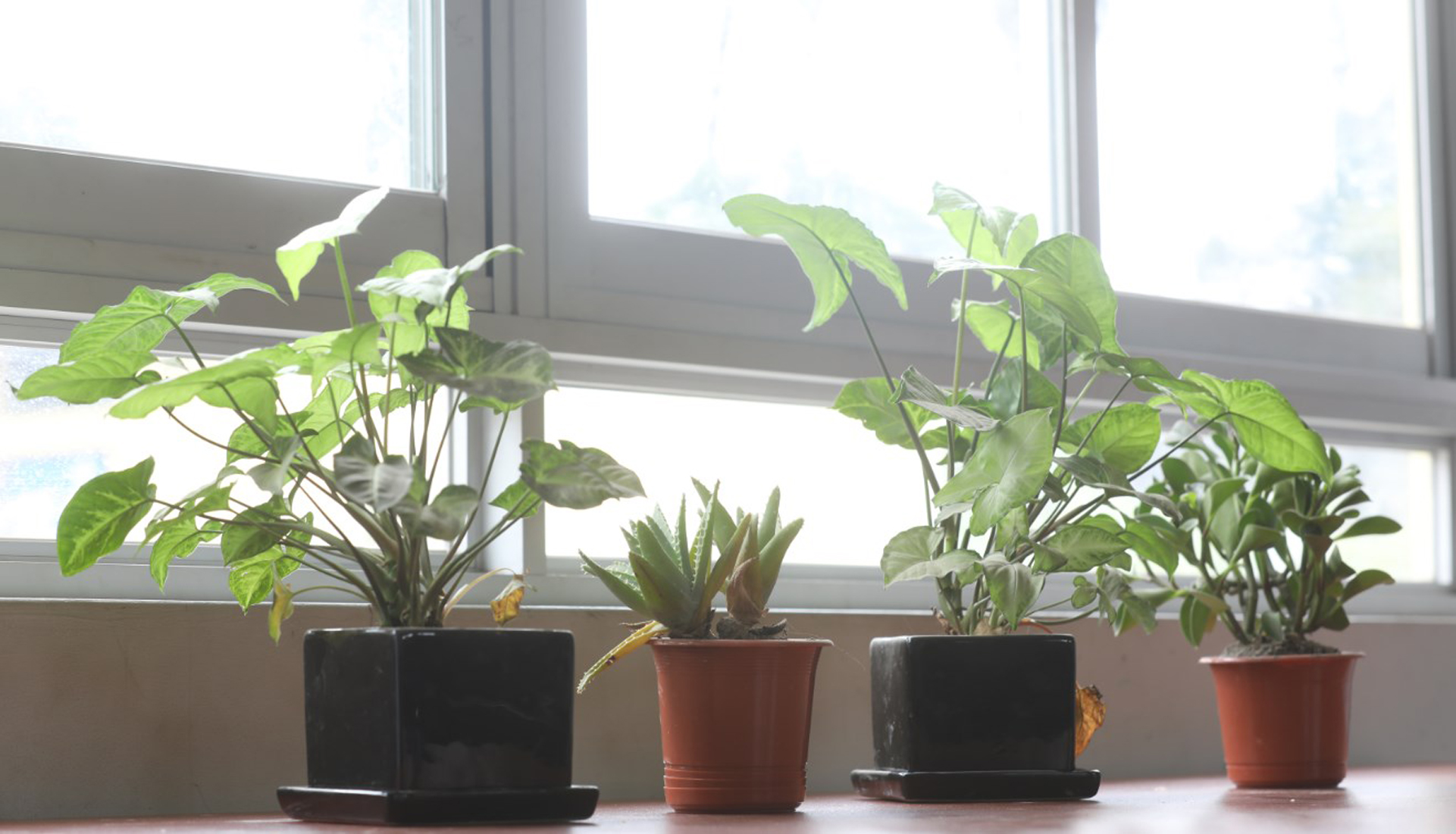 La luz natural es muy reconfortable para las plantas. (Foto: Serpar)