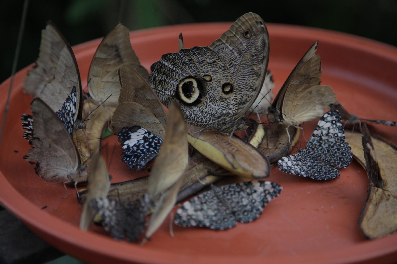 Las mariposas esperan por ti en Puerto Maldonado. (Foto: PromPerú)