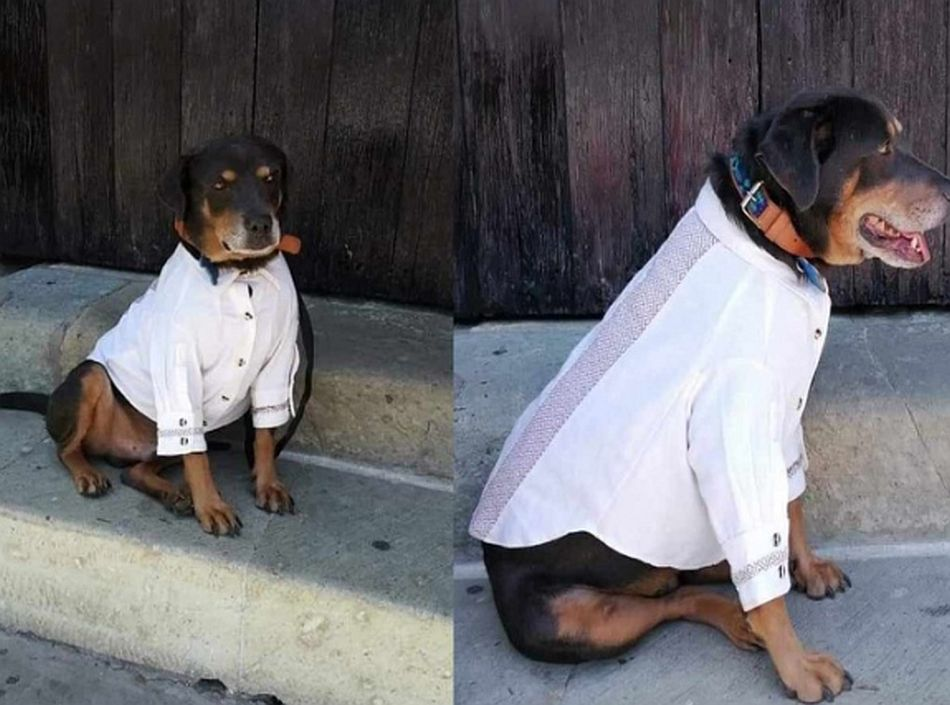 El perrito ya tiene su atuendo de gala, pues es el invitado de honor de todas las fiestas. (Foto: Facebook Abelardo Acevedo Ruíz)