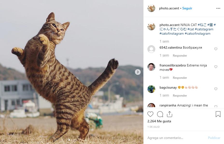 Los gatos ninjas de Instagram son todo un fenómeno en Instagram. (photo.accent)