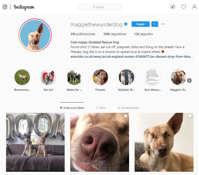 La cuenta de Maggie en redes sociales. (Instagram | maggiethewunderdog)