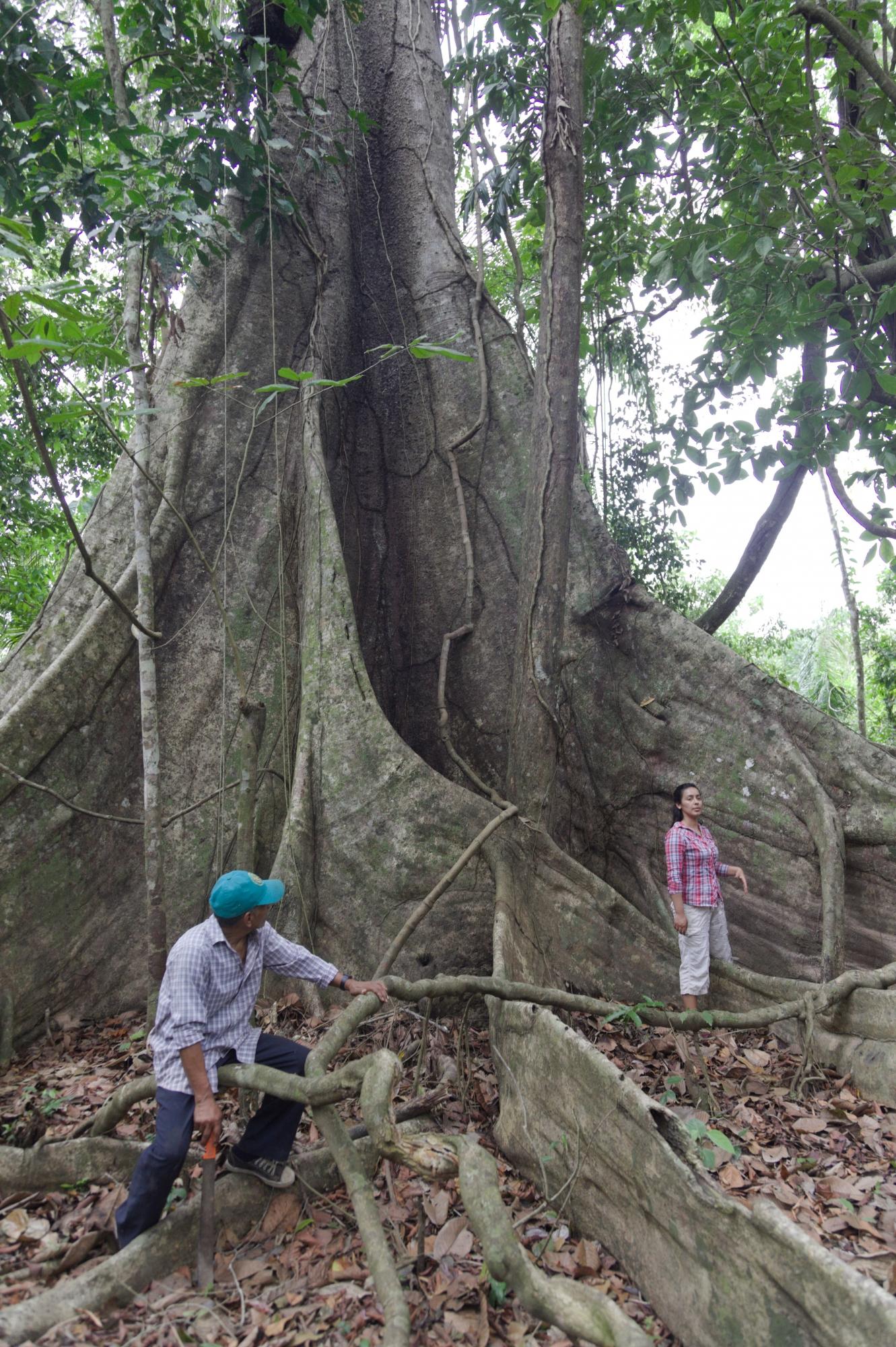 Sus árboles longevos son parte del atractivo. (Foto: PromPerú)