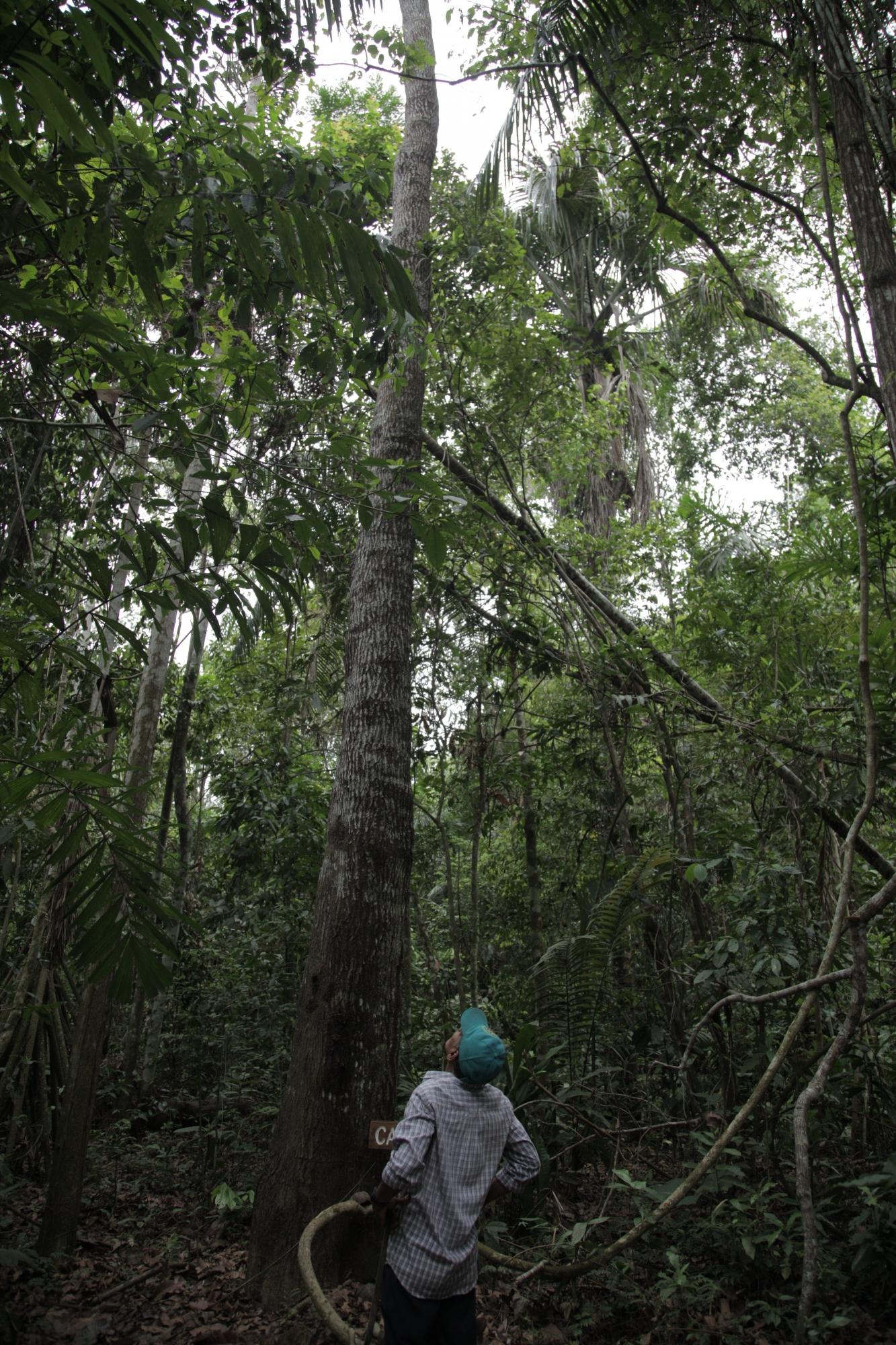 Los altos árboles son una de las características principales de este Parque Nacional. (Foto: PromPerú)