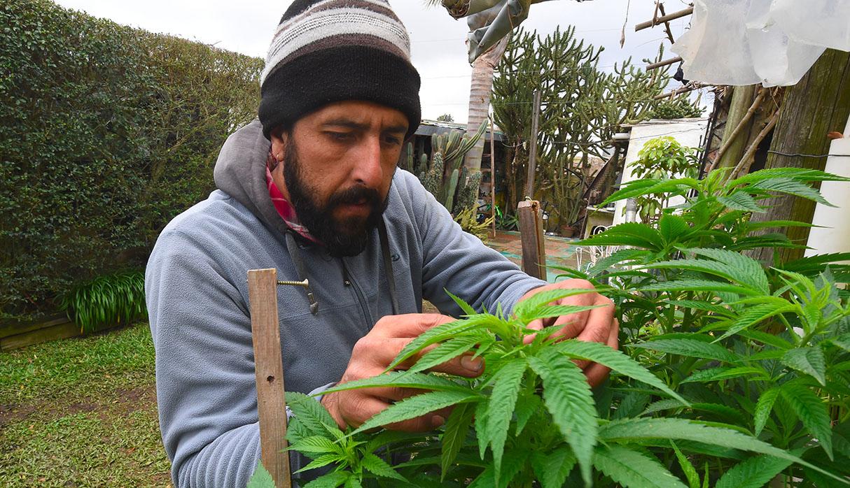 El uso de la marihuana es legal en Uruguay. (Foto: AFP/archivo)