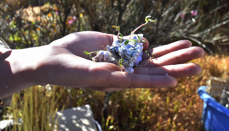 Si estos papeles son sembrados, pueden florecer. (Foto: EFE)