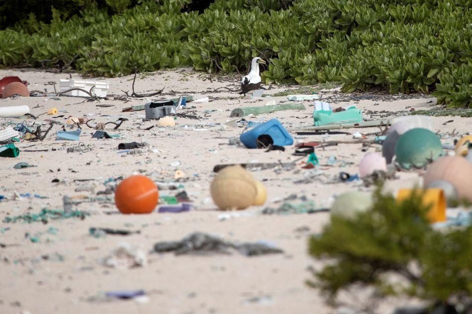 En 1988 la Isla Henderson, en el Pacífico, fue inscrita en la lista del patrimonio mundial por su