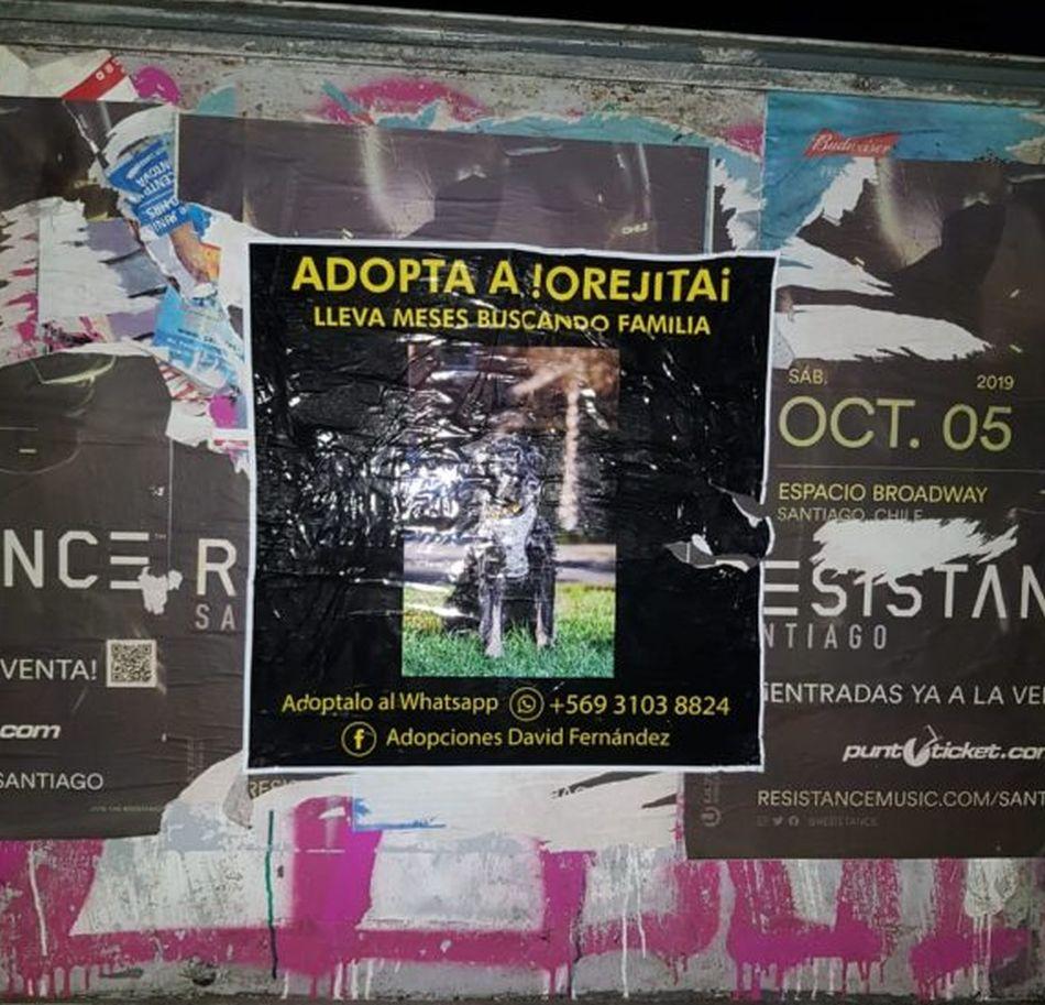 Las calles de Santiago han sido invadidas por carteles buscando un hogar para el tierno 'Orejitas'. (Foto: Facebook Adopciones David Fernández)