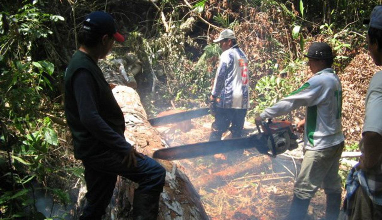 La tala ilegal de árboles afecta a los bosques del mundo. (Foto: Inrena/archivo)