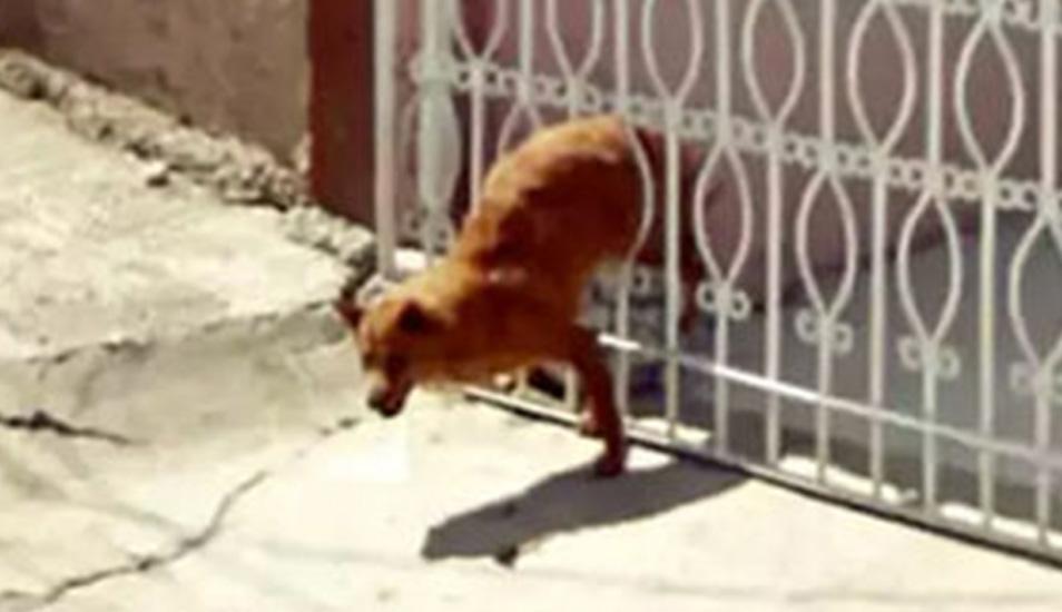 La mascota no pensé nunca que no podría salir de esta situación incómoda. Atrapado entre rejas, fue captada por Google Maps. (Foto: Google)