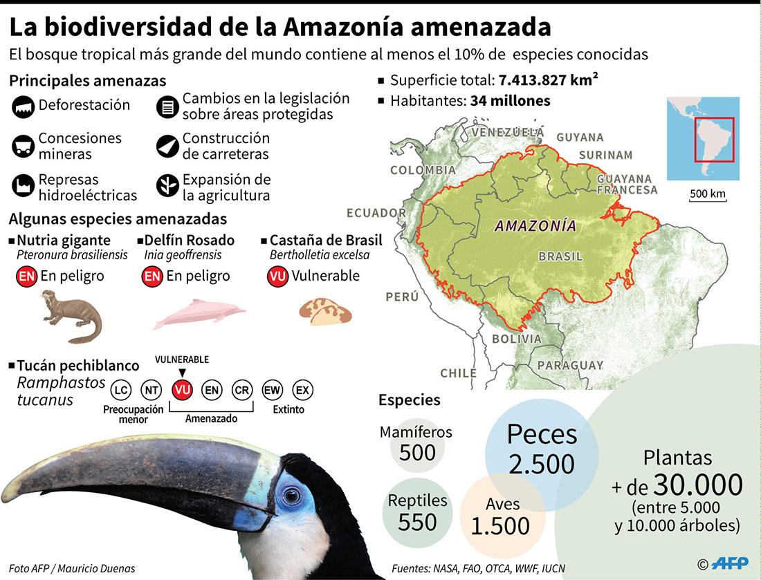 Amazonía y las amenazas a su biodiversidad . (Infografía: AFP)