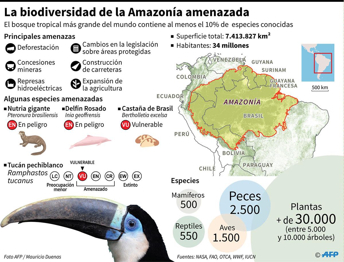 Ficha sobre la biodiversidad de la Amazonía y las principales amenazas que enfrenta. (Infografía: AFP)