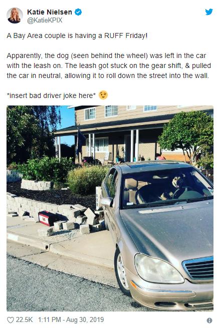 Hombre dejó a su perro dentro de su auto y todo terminó de forma catastrófica. (Foto: KatieKPIX)