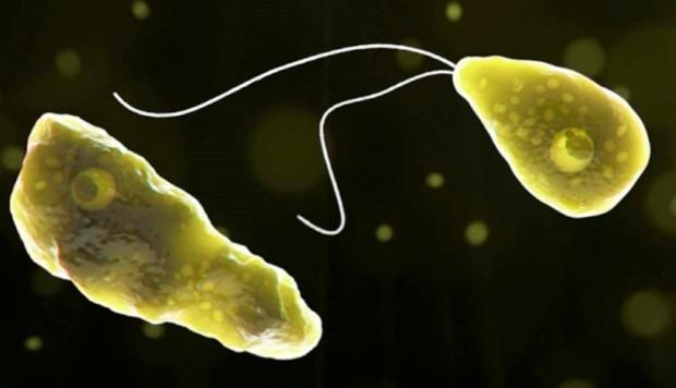 El parásito entra al cuerpo humano a través de la nariz, luego pasa al cerebro, donde destruye el tejido cerebral. (Foto:Sociedad Internacional de Enfermedades Infecciosas)