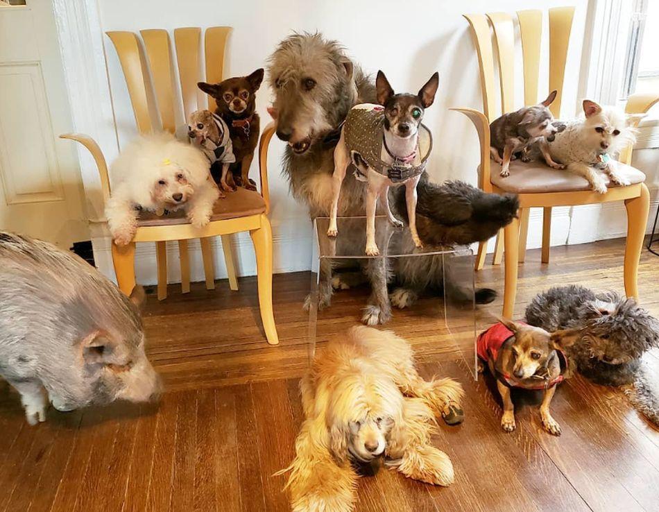 Para esta peculiar familia no existen las diferencias y todos conviven en armonía. (Foto: Instagram @wolfgang2242)
