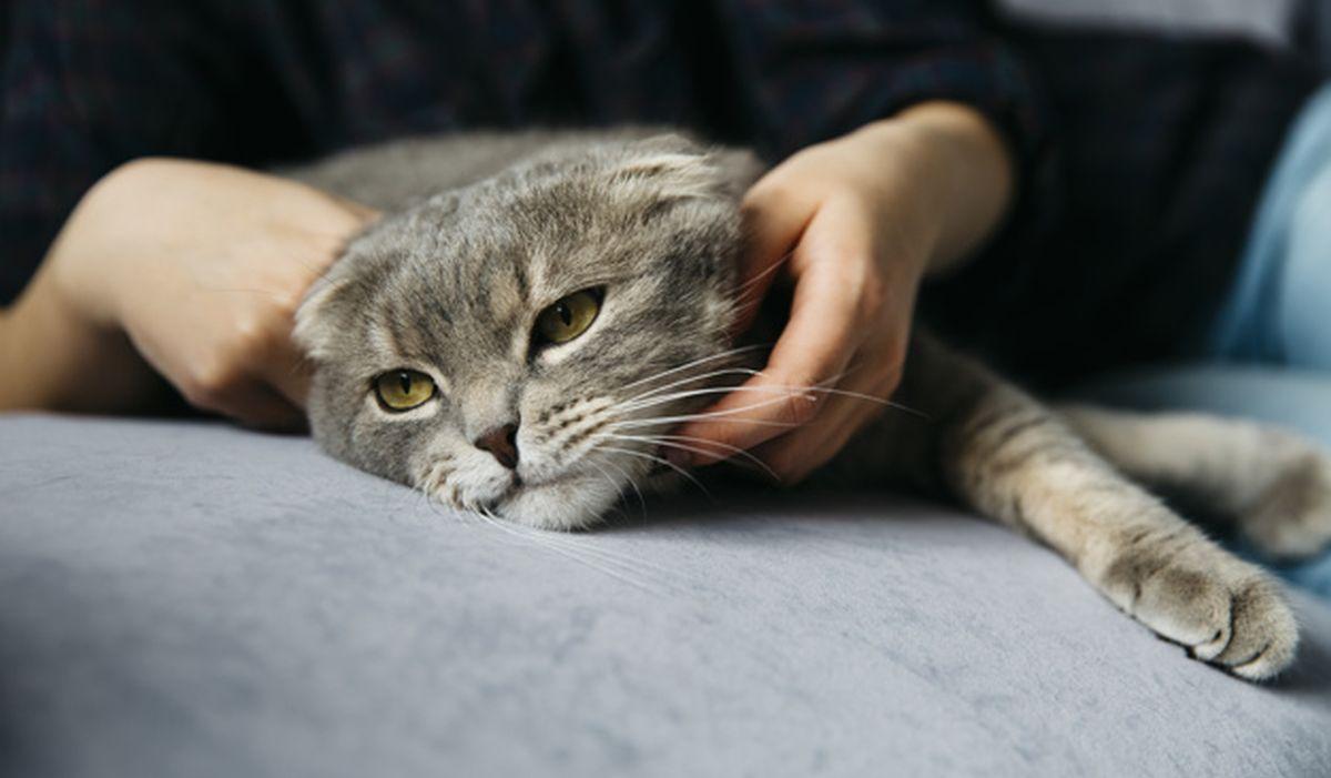 Los gatos, como la mayoría de los felinos, poseen una extraordinaria agilidad para su relación tamaño/peso corporal. (Foto:Freepik)