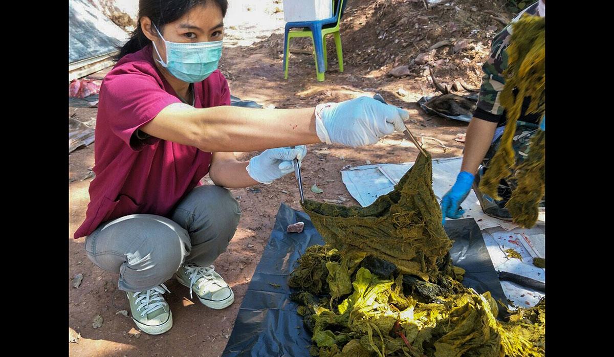 Una veterinaria sostiene una pieza de ropa interior recuperada del estómago de un ciervo muerto en el Parque Nacional Khun Sathan en la provincia tailandesa de Nan. (Foto: AFP)