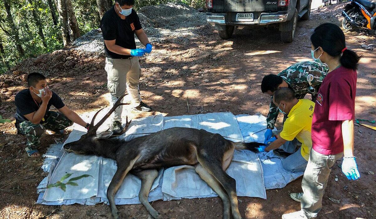 En el interior del ciervo hallaron plástico, servilletas y hasta ropa interior. (Foto: AFP)