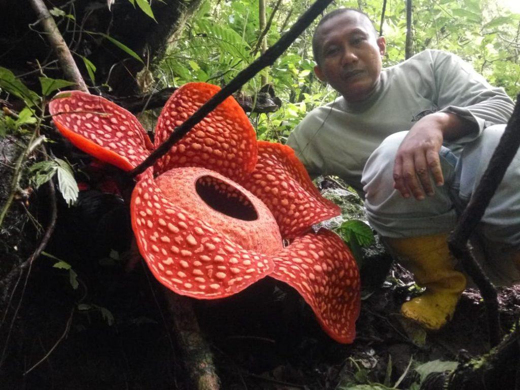 Foto: Centro de Conservación y Recursos Naturales de Sumatra Occidental